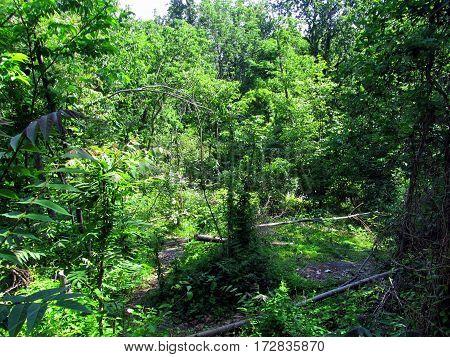 Culp's Hill Woods, Getysburg national military park, Getysburg Pennsylvania
