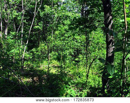 Scenic Woods on Culp's Hill, Getysburg national military park, Getysburg Pennsylvania