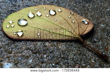 Leaves that fall tend to catch and hold rain drops