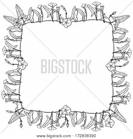 bindweed floral square frame border wreath for your text branch with leaves buds and flowers contours isolated on white background hand-drawn. Vector illustration