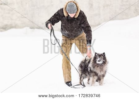 The man is engaged in the training of the breed Keeshond dog on snow in winter