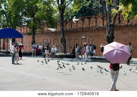 Chiang Mai / Thailand - Feb 15,2017:pigeons At The Yard Tha Pae Gate Chiang Mai, Thailand.