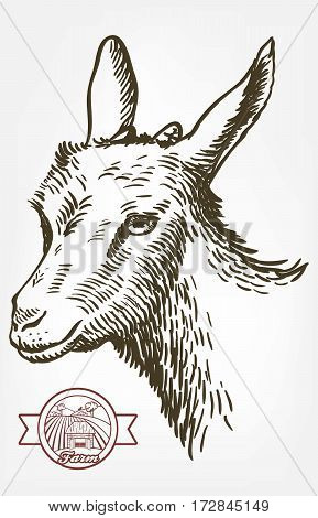 goat head. livestock. animal grazing. sketch drawn by hand on a white background