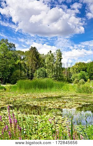 The landscape of greenery, a pond and clouds in a blue sky. A beautiful summer day in the botanical garden.