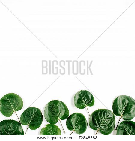 Green leaves pattern on white background. Flat lay top view. Blog header