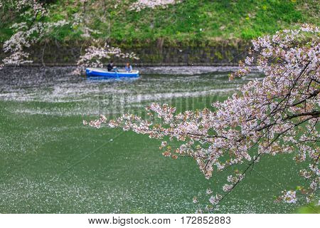 Chidorigafuchi park during the spring season this area is popular sakura spot at Tokyo Japan.