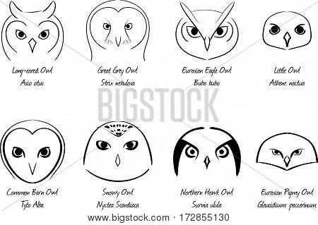 Stylized owls isolated on white background. Vector illustration. Vector line icons