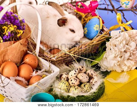 Easter bunny and egg. Rabbit among spring holiday flowers on table. Small basket and nest with quail eggs yellow blue colors. It can be used as a holiday card.