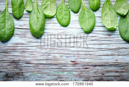 Fresh Baby spinach leaves on blue wooden background. Top view with copy space, horizontal frame, banner. Healthy, Ecology concept