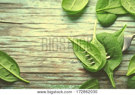 Fresh Baby spinach leaves skewered on a fork, blue wooden background. Top view with copy space, horizontal frame, toned. Healthy, Ecology concept