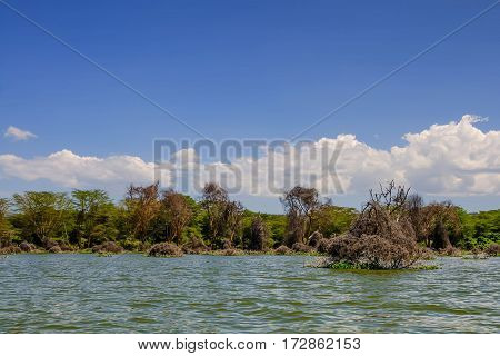 Scenic panoramic view with dry dead trees of lake Naivasha in Kenya, Africa