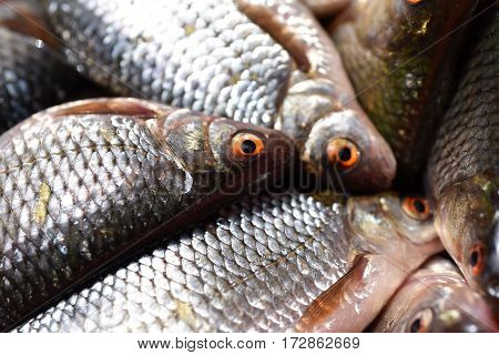 Close-up Of Fresh Fish In The Fish Market