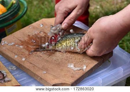 Firsherman Cleaning Scales Of Freshly Caught Fish