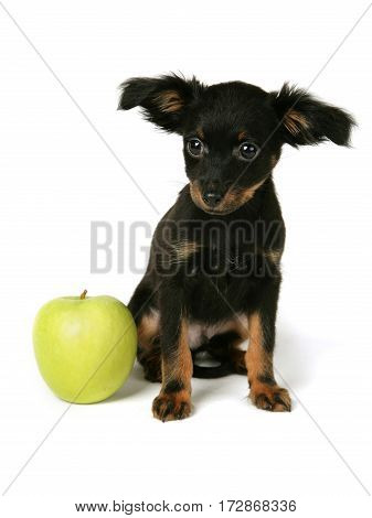 Russian Toy with apple in front of white background dress whit orange