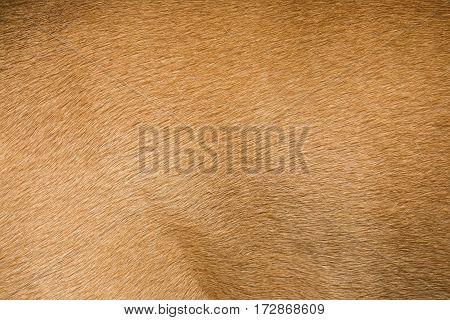 Brown dog fur texture or background. Macro shot.