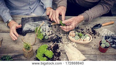 Botanical Environment Green Pottery Nature
