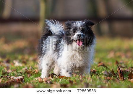 Portrait Of An Elo Puppy