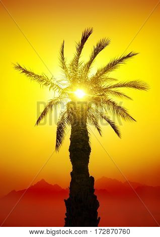 Palm in desert mountains at the sunset