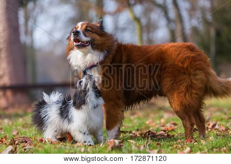 Elo Dog And Puppy Playing Outdoors