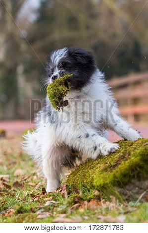 Elo Puppy Having Moss In The Snout