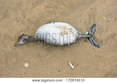 Dead Bird On The Sandy Sea Beach, Top View
