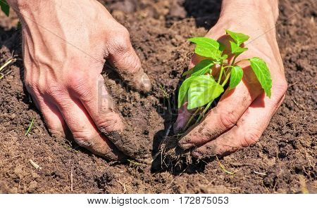 Dirty and muddy of male hands and ground plant