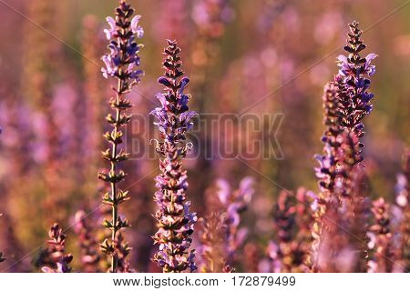 colorful wild flowers growing on summer meadow