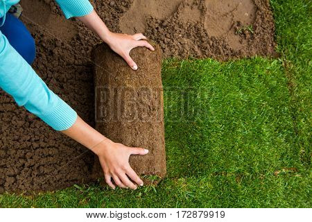 Woman applying turf rolls in the backyard