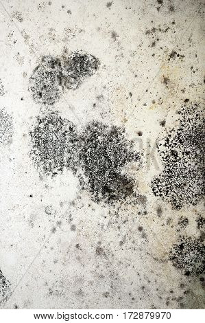 detail of mold on plaster damp effects on white wall
