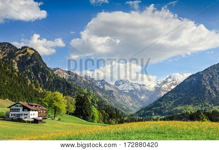 Beautiful flower meadow and snow covered mountains and a farmhouse in the background