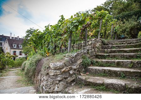 Old stairs on vineyard of Montmartre Paris France.