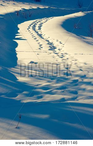 wildlife traces on rural road winter scene