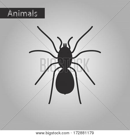 black and white style icon of tarantula