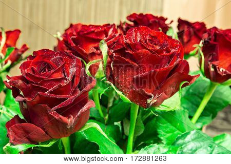 Bouquet of roses with leaves for congratulation.