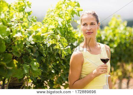 Female vintner holding wine glass in vineyard