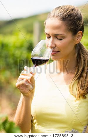 Female vintner smelling glass of wine in vineyard