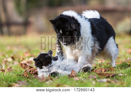 Elo Puppy Playing With The Mother