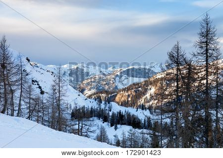 winter landscape with snow covered trees photo