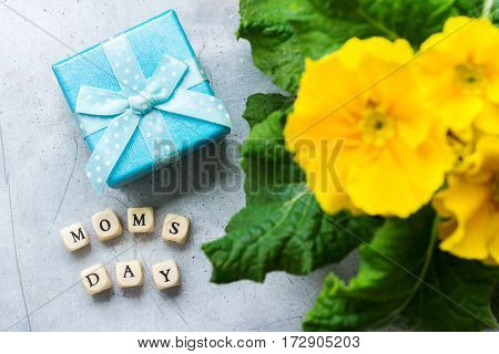 Colorful bright yellow primrose primula flowers and gift box for mothers day. Spring greeting card
