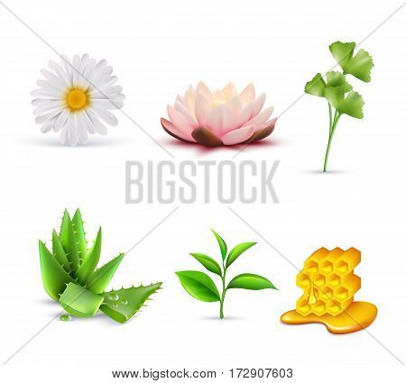 Organic cosmetic ingredients set including lotus and chamomile aloe vera green tea and honey isolated vector illustration