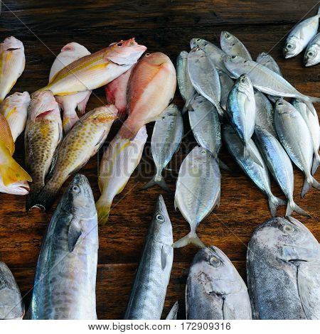 Fish tuna and  barracuda on a wooden background