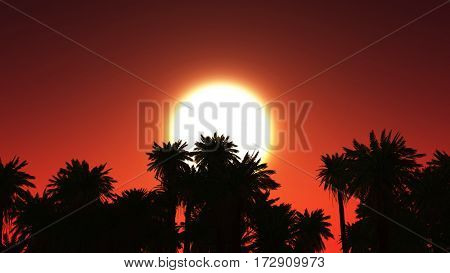 3D render of a tropical landscape with palm trees against sunset sky