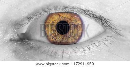 Beautiful Human Brown  Eye, Macro, Close Up  Black And White