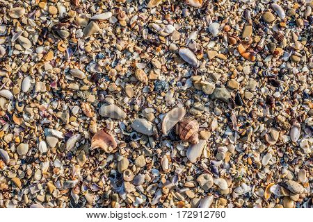 Sand Texture Background. Top View of a Beach or Desert Ground Surface. Close Up Macro. Text space