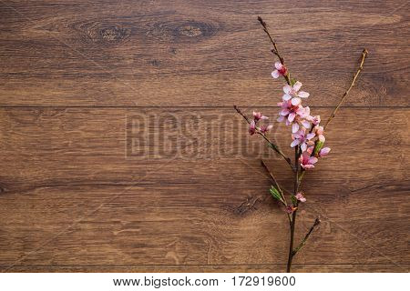 Spring branch of blossom cherry on a wooden background with a warm lamp light. Pink spring flowers flat lay copyspace. Spring background. Spring tree