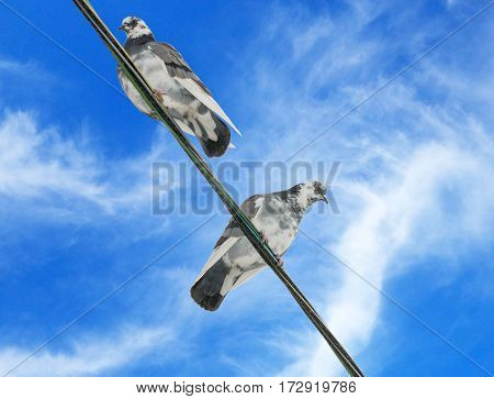 pigeons sit on wires on background sky
