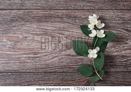 White jasmine flowers lie on a wooden background. Wedding invitation card. Space for text and design. Jasmine background