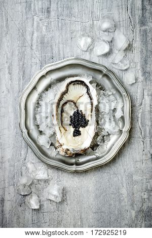 Opened oyster with black sturgeon caviar on ice in metal plate on grey concrete background. Top view flat lay copy space