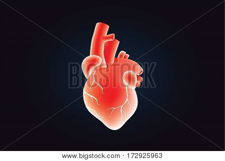 Human heart vector red color on black. Illustration about medical and anatomy.