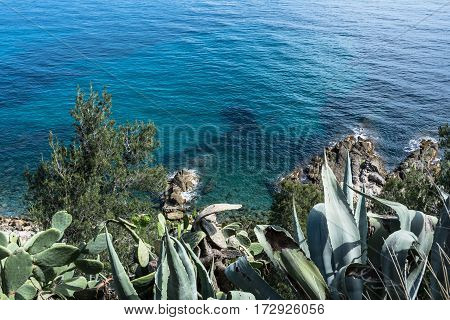 View of the coast of Sanremo with blue sea and succulent plants, Italy
